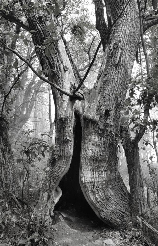 mystic_tree
